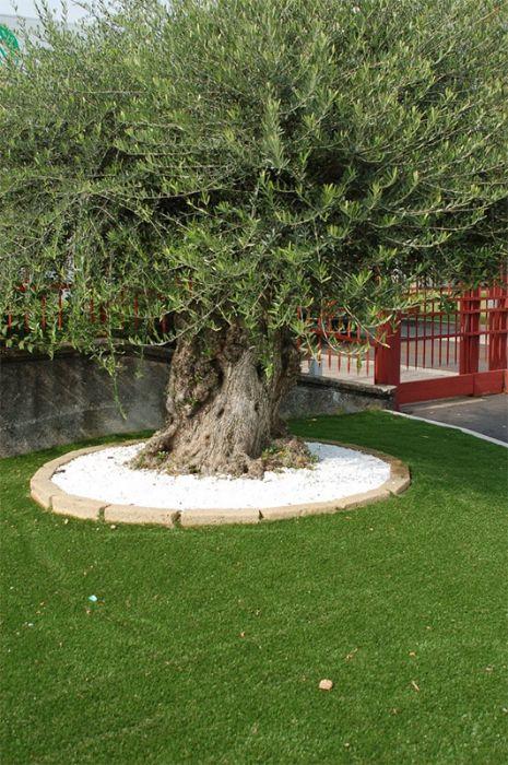 Preventivo erba naturale sintetica per giardini e piscine - Erba nana per giardino ...